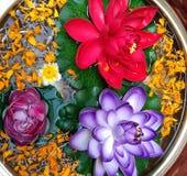 Flores vermelhas e roxas impressionantes Fotos de Stock Royalty Free
