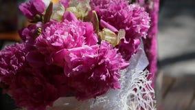 Flores vermelhas em grandes números em um dia brilhante ensolarado vídeos de arquivo