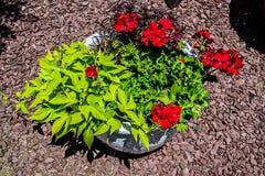 Flores vermelhas em pasta e ajardinar a vista aérea Imagens de Stock Royalty Free