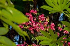 Flores vermelhas em um fundo das folhas verdes Fotos de Stock Royalty Free