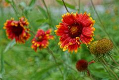 Flores vermelhas em um jardim da mola fotografia de stock royalty free