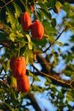 Flores vermelhas em uma árvore fotografia de stock royalty free