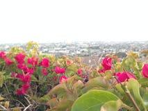 Flores vermelhas na borda de um monte Imagens de Stock Royalty Free