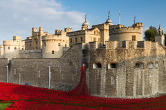 Flores vermelhas na torre de Londres Foto de Stock Royalty Free