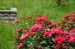 Flores vermelhas no castelo do kutahya Imagens de Stock Royalty Free