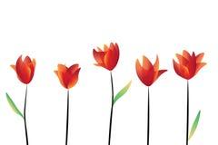 Flores vermelhas no fundo branco Fotografia de Stock Royalty Free