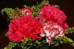 Flores vermelhas no fundo preto fotografia de stock royalty free