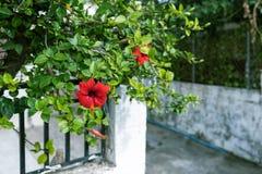 Flores vermelhas no jardim fotos de stock