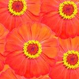 Flores vermelhas para a decoração Foto de Stock