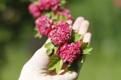 Flores vermelhas pequenas Fotografia de Stock