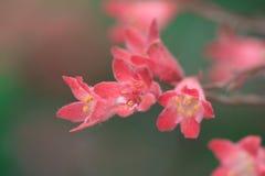Flores vermelhas pequenas Fotos de Stock Royalty Free