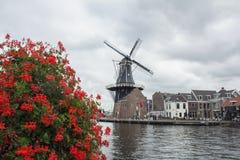 Flores vermelhas perto do moinho velho e diversas casas holandesas velhas no rio Imagens de Stock Royalty Free