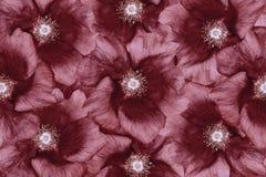 Flores Vermelho-brancas do fundo floral colagem floral Composição da flor closeup Imagem de Stock Royalty Free