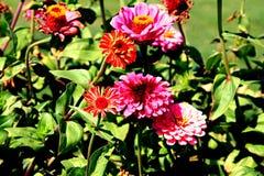 Flores vibrantes Imagens de Stock Royalty Free
