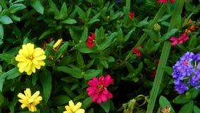 Flores vibrantes Fotografía de archivo