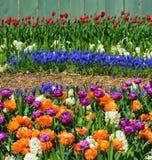 Flores vibrantes de la primavera en la plena floración Fotos de archivo libres de regalías
