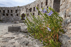 Flores viejas del witn de la ciudad de la barra de la pared montenegro Imagenes de archivo