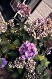 Flores violetas imagem de stock royalty free