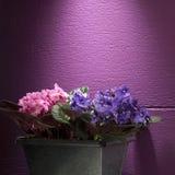 Flores violetas Imagens de Stock