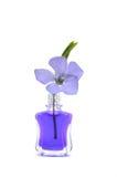 Flores violetas Imagem de Stock