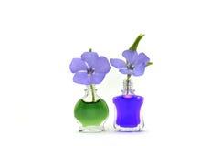 Flores violetas Foto de Stock Royalty Free