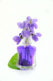 Flores violetas Fotos de Stock