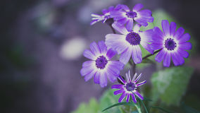 Flores violetas Foto de archivo