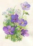 Flores violetas ilustração stock