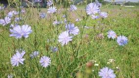 Flores violetas almacen de metraje de vídeo