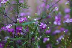 Flores violetas imagenes de archivo
