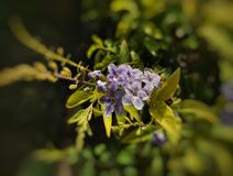Flores violetas fotografia de stock