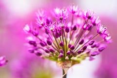 Flores violetas abstractas Fotografía de archivo