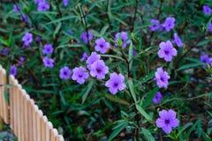 Flores violetas abstratas no campo Fotos de Stock Royalty Free