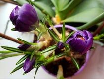 Flores violetas bonitas Fotos de Stock Royalty Free