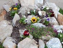 Flores violetas coloridas en un jardín Foto de archivo