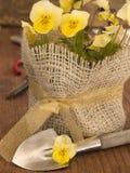 Flores violetas con el equipo de jardín Imagen de archivo