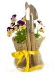 Flores violetas con el equipo de jardín Foto de archivo