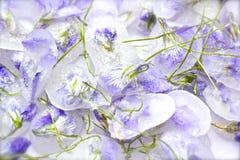 Flores violetas cristalizadas fotos de stock