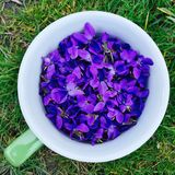 Flores violetas da mola em um copo Imagens de Stock