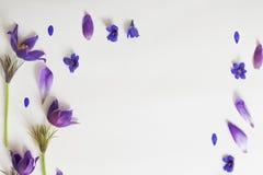 Flores violetas da mola em um fundo branco Imagens de Stock