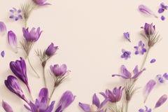 Flores violetas da mola em um fundo branco Foto de Stock