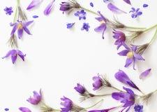 Flores violetas da mola em um fundo branco Fotos de Stock Royalty Free