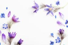 Flores violetas da mola no fundo branco Fotos de Stock Royalty Free
