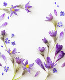 Flores violetas da mola no fundo branco Imagens de Stock