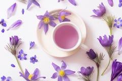 Flores violetas da mola no fundo branco Foto de Stock
