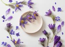 Flores violetas da mola no fundo branco Imagens de Stock Royalty Free