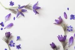 Flores violetas da mola no fundo branco Foto de Stock Royalty Free