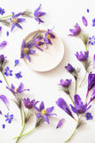 Flores violetas da mola no fundo branco Imagem de Stock