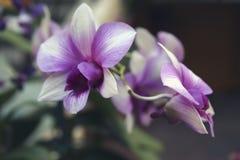 Flores violetas de la orquídea Imágenes de archivo libres de regalías