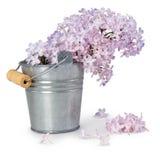 Flores violetas de la primavera de la lila Imagen de archivo libre de regalías